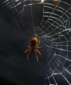 Die Spinne und der vergessene Faden | Fabel von Johannes B. Lotz