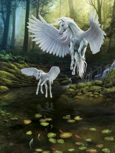 Aww that's my white Pegasus teaching his daughter how to fly. (I have to get the female Pegasus and foal) Unicorn And Fairies, Unicorn Fantasy, Unicorn Art, Mythical Creatures Art, Mythological Creatures, Magical Creatures, Arte Equina, Winged Horse, Unicorn Pictures
