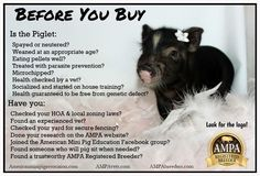 Before you buy! Get some facts. Horse Care, Dog Care, Pig Facts, Pig Showing, Miniature Pigs, Pot Belly Pigs, Small Pigs, Pig Pen, Teacup Pigs