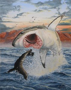 "Oil on canvas, 22""x28"" about 150 hours. Off the coast of South Africa a Great White shark breaches the surface to surprise a seal. (To purchase a print)"