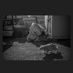 Cats April 2013 #cat #blackandwhitephotography