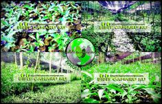 http://bibitgaharuku.wordpress.com Di jual Bibit Gaharu jenis Aquilaria Malaccensis asli kalimantan. Bibit gaharu dari indukan yg sudah berumur 50 thun siap antar seluruh Indonesia. - Tinggi 20 sampai 50 cm harga Rp. 2.000,- / bibit - Tinggi 5 sampai 15 cm harga Rp. 1.000,-/ bibit (Ready Stocks) Lokasi : Banjarbaru (Kalimantan selatan) Contact Person : 085272223447 / 08195363177