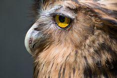 Zmiana zawodu: Jakie kompetencje powinnam rozwijać? Bird, Animals, Animaux, Birds, Animal, Animales, Animais