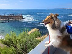 Pacific Ocean, ©Janet Wall at howtoloveyourdog.com via Flickr.