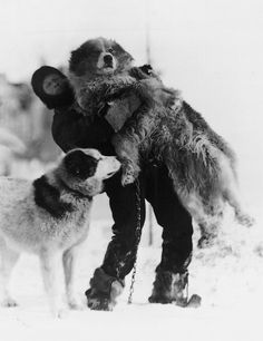 Dr. Leonard Hussey and Samson, members of the Endurance expedition. Photo by Frank Hurley, 1915.Ernest Shackleton set out on this expedition to complete one of the biggest and most ambitious polar journeys ever attempted by man. By dog sled, Shackleton proposed to travel 1800 miles across the Antarctic continent.