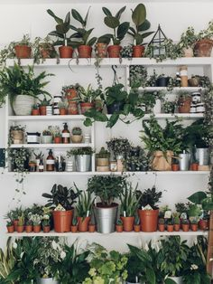 house plants 770326711242154632 - Falmouth Notes – Cornwall — Haarkon – Lifestyle, Travel and Design Source by Room With Plants, House Plants Decor, Plant Decor, Plant Shelves, My New Room, Indoor Plants, Indoor Gardening, Gardening Tips, Houseplants