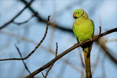 Papagei im Januar - Jahreszeiten - Galerie - Community