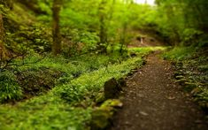 trail through woods tilt shift wide hd wallpaper Forest Path, Modern Witch, Forest Landscape, High Quality Wallpapers, Blue Ridge, Trail Running, Pathways, Wilderness, Beautiful Places