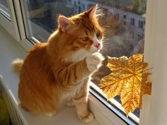 """* * """" A real live leaf......musta gotz caught whenz window wuz slid across. Meez lucky day."""""""