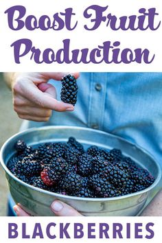 A Tasty Task: Fertilizing Blueberries and Blackberries Boost fruit production with timely fertilizer applications to your berry bushes. Here are tips and timelines to show you how. Blackberry Bush, Berry Plants, Garden Pests, Garden Fertilizers, Garden Planters, Edible Garden, Fruit Garden, Vegetable Garden, Garden Care