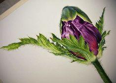 Eunike Nugroho: [WIP] Oriental Poppies & Langkah-langkah Pengerjaan