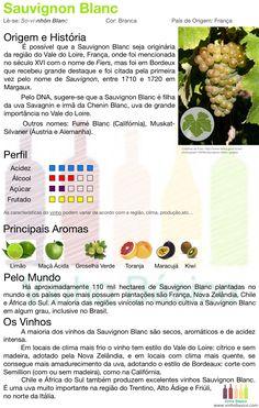 Sauvignon Blanc vinhobasico