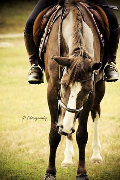 jps-life-of-equines:  Pedro