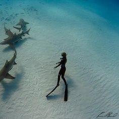 Ocean Ramsey free dive