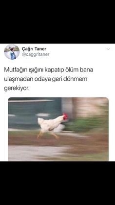 aynı benim iç sesim lustig – So Funny Epic Fails Pictures Ridiculous Pictures, Epic Fail Pictures, Funny Share, Stupid Cat, Comedy Zone, Funny Laugh, Fun Comics, Just Smile, Life Humor