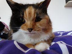 Tammy Cat | Pawshake Lincoln