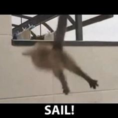 SAIL! Awolnation Cat on Youtube
