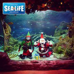 See Seahorses. Build Legos. Donate Toys.