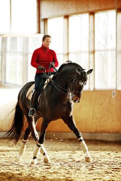Ride a (upper level) dressage horse in Germany