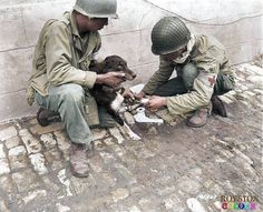 Two US 1st Army medics give first aid to an injured French dog they had found amid the ruins of Carentan in Normandy, France on July 1 1944.