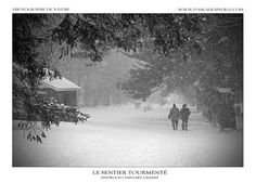 Monochrome, Canada, Snow, Painting, Outdoor, Art, Pathways, Outdoors, Monochrome Painting