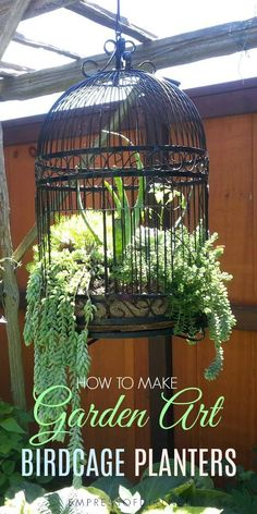 Birdcage planters are a favorite with creative gardeners These tips share ideas for setting up a new or upcycled birdcage as a planter for succulents or annuals birdcage gardenart flowerplanter gardening repurposed upcycle empressofdirt succulents #