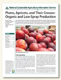 Want to learn more about organic and reduced-spray management options for disease and pest problems of plums, apricots, and their crosses (pluots, apriums, etc.)? Check out this new publication from ATTRA!