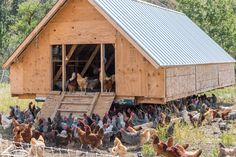 Illustration Photo: Poultry farming (credits: Washington State Department of Agriculture / Flickr Creative Commons Attribution-NonCommercial 2.0 Generic (CC BY-NC 2.0)) Poultry Farming, Livestock Farming, Photo Illustration, Washington State, Agriculture, Bird, House Styles, Creative, Pictures