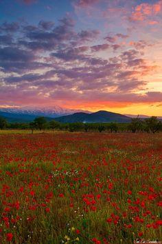 Spring Sunset in Sierra Nevada