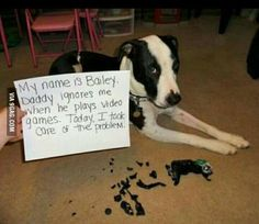 * * ANIMALS JUST WANT TO BE RECOGNIZED TOO...I CAN'T BLAME THE DOG ON THIS ONE. HE WAS DESPERATE.