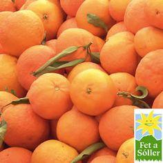 Canoneta Saftorange, die es nur im Tal von Soller (Sóller) gibt - Versand durch www.fetasoller.com