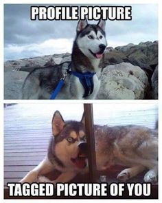 Funny Animal Memes Of The Day – 52 Pics – Lovely Animals World Memes de animales divertidos del día – 52 fotos – Lovely Animals World Cute Animal Memes, Animal Jokes, Cute Funny Animals, Funny Animal Pictures, Cute Baby Animals, Funny Profile Pictures, Animal Funnies, Hilarious Pictures, Farm Animals