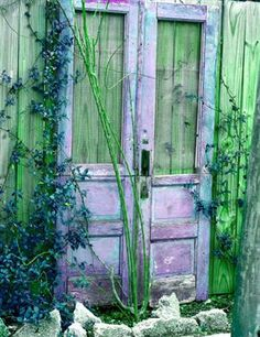 Old lavender wood and glass doors leaning against a greenish wood fence in a garden.....