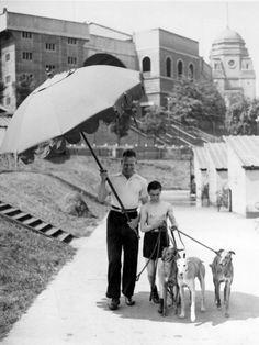 Pampered Greyhounds