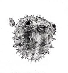 Happy Fugu (Puffer Fish) Art Print by annielane - X-Small Fish Drawings, Ink Pen Drawings, Tattoo Drawings, Animal Sketches, Animal Drawings, Puffer Fish Art, Tattoo Pez, Fish Sketch, Red Ink Tattoos