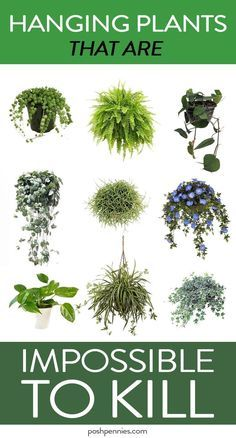 absolute best list of practically immortal indoor hanging plants that you can't kill no matter how hard you try.The absolute best list of practically immortal indoor hanging plants that you can't kill no matter how hard you try. House Plants Decor, Garden Plants, Veg Garden, Easy House Plants, Vegetable Gardening, Indoor House Plants, Gardening Tools, Garden Boxes, Air Plants