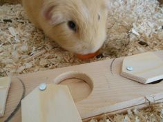 How to make a brainer teaser toy for guinea pigs ( food board )