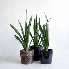 Planter Pots, Inspiration, Biblical Inspiration, Inspirational, Inhalation
