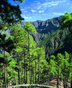 Op het Spaanse eiland La Palma is het op en top genieten van groene natuur tijdens je roadtrip.