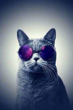 It's a cool cat