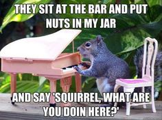 funny animal pictures pictures funny Animals Old Billy Joel song! Cracking up! No pun intended! Funny Animal Quotes, Funny Animal Pictures, Animal Memes, Funny Animals, Cute Animals, Animal Humor, Squirrel Pictures, Animal Pics, Animal 2