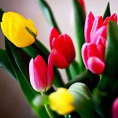 Lubimy #tulipany #tulips #kwiatki #kwiaty #polska #poland