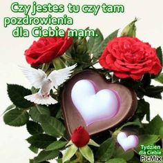 Good Morning, Plants, Cards, Blog, Texts, Facebook, Flowers, Polish Sayings, Bom Dia