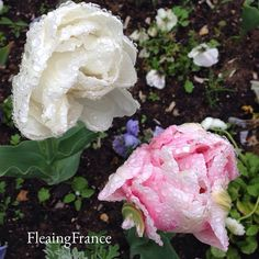 Spring blooms In the French countryside. #FleaingFrance #France #travel #trips #shopping #garden