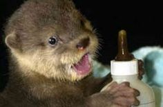 Baby Otters That Are So Cute, You'll Cry - Answers.com