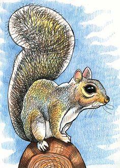 Tommy Kane's Art Blog: Squirrel On The Road Forest Animals, Woodland Animals, Squirrel Illustration, Squirrel Art, Squirrel Pictures, Artist Journal, Woodland Creatures, Watercolor Animals, Rock Art