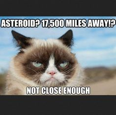 cb1a452540ba824d85cd0eae1d8f2b08 grumpy cat meme cat memes grumpy cat twinkle twinkle little star google search places to,Frowning Cat Meme