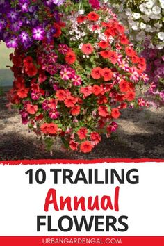 Trailing annuals are perfect for hanging baskets or containers. Here are 10 beautiful annual flowers that have trailing or cascading habits. #flowers #annuals #flowergarden Annual Flowers For Shade, Shade Flowers, Planting Flowers, Flower Gardening, Hanging Flower Baskets, Growing Seeds, Garden Beds, Be Perfect, Garden Landscaping
