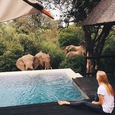 Imagine being visited by elephants while you are sitting by a swimming pool.