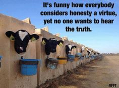 it's funny how most consider honesty a virtue, yet they don't wants to hear the truth -- the truth about the cruel dairy industry #vegan